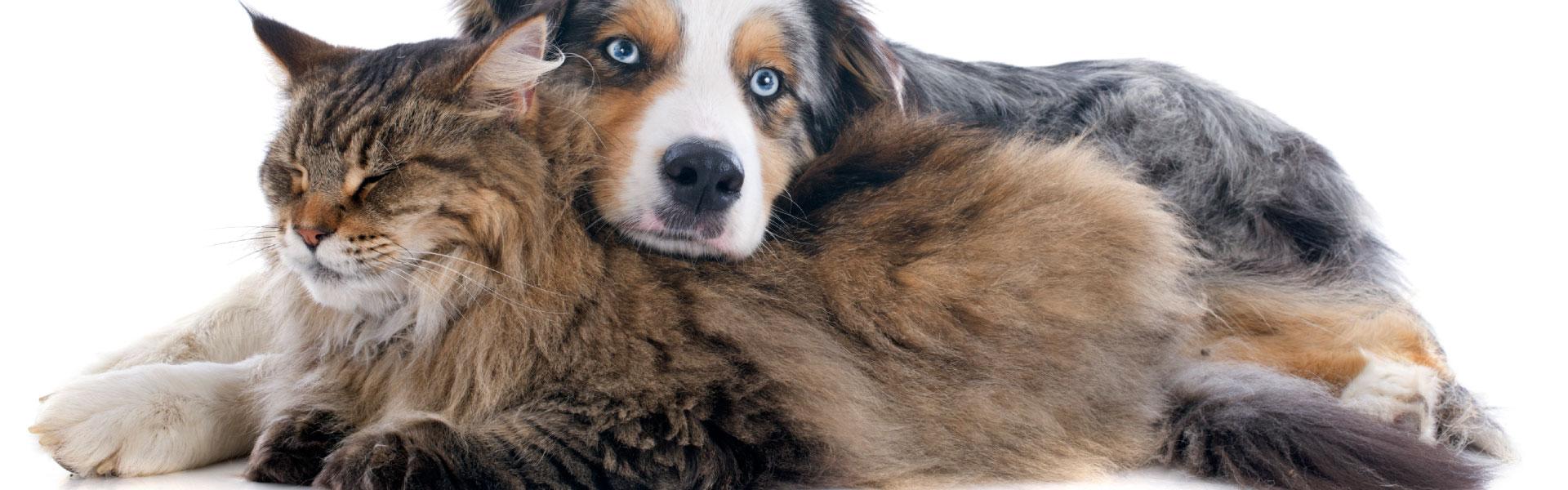 dyrlæge priser hunde