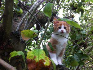 Kattekilling udenfor