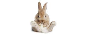 dyrlæge Holte - kanin